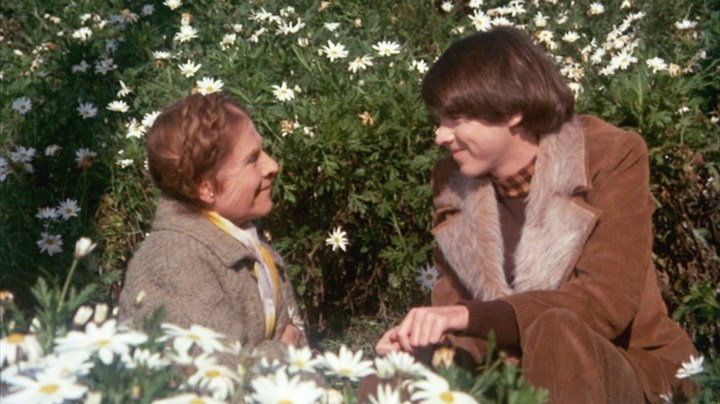 One of the Darkest and Most Beautiful Romantic Comedies Ever Made: Harold and Maude Review